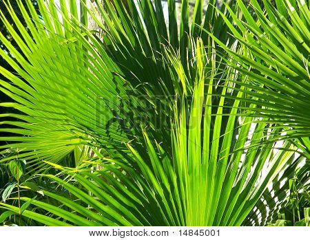 Tropical Green Palm Frond Plant