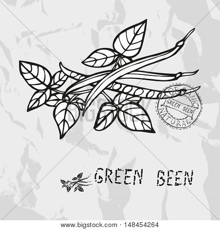 Hand Drawn Green Been