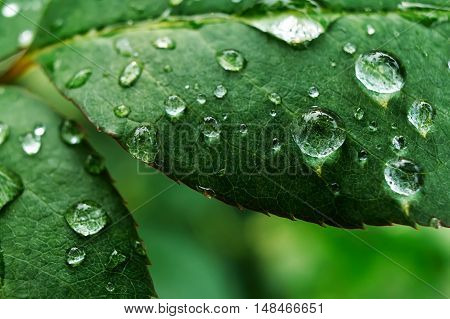 Extreme macro closeup of leaves with dewdrops after rain