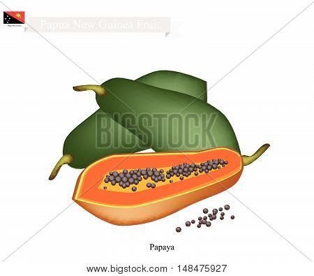 Papua New Guinea Fruit Illustration of Ripe Papaya. One of The Most Popular Fruits in Papua New Guinea.