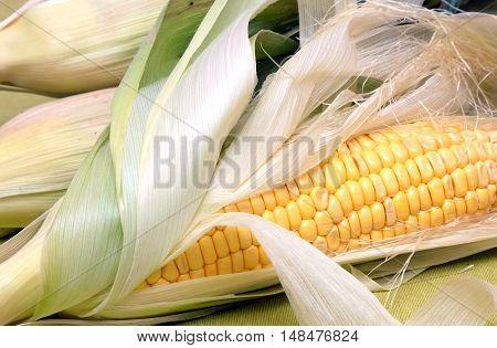 Ripe raw corn on the cob close-up horizontal view closeup