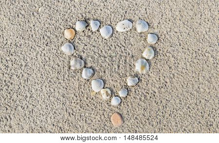 Heart of cockle shells in a wet sand