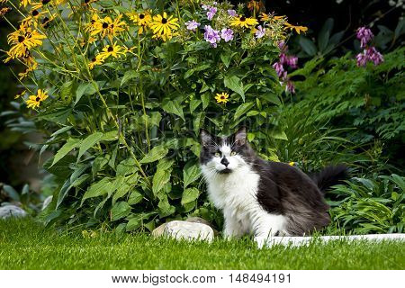 Cute cat sitting next to garden. A cute cat in the grass by the flower garden.