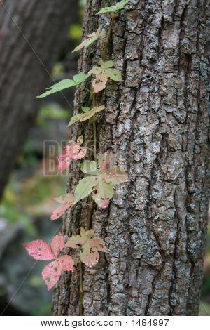 Pastel Vines On Tree Trunk
