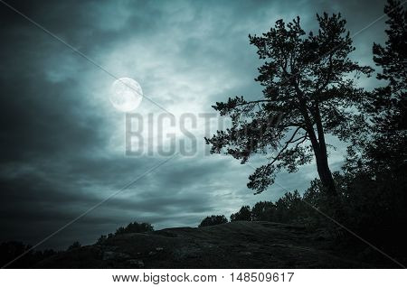 Night Forest Under Sky With Full Moon