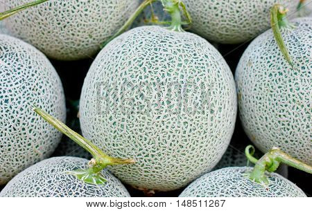 cantaloupe melon Close up with green texture