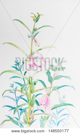 Watercolor painting original realistic herb of sesame flower and green leaves in white background. Original painting