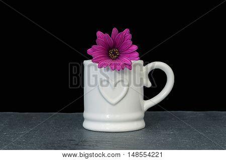 white mug with pink osteospermum (daisy) on black background
