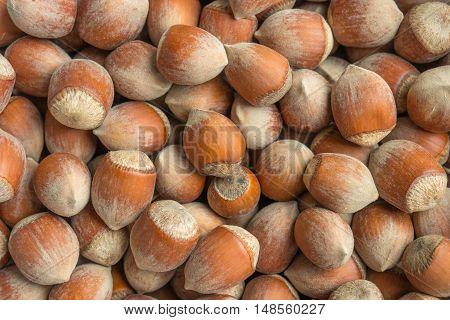 Stack of hazelnuts. Hazelnut background. Healthy eating vegetarian nut food hazelnut.