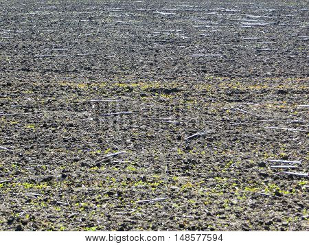 ploughed field before the seeding on spring