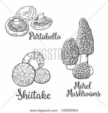 Set of portobello, morel and shiitake edible mushrooms sketch style vector illustration isolated on white background. Collection of edible mushrooms - shiitake, morel and portobello