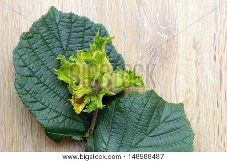 Cob nuts and leaves - also known as hazelnuts