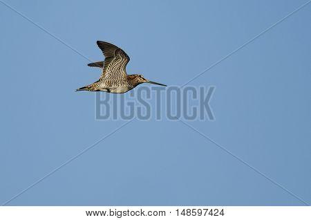 Lone Wilson's Snipe Flying in a Blue Sky