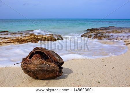 Old Coconut at the caribbean beach.Beautiful caribbean sea landscape.