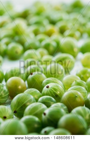 Close View Of Ripe Fresh Gooseberry Berry Small Fruit, Ribes Uva-Crispa Or Ribes Grossularia On The White Tablecloth.