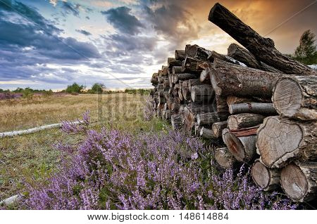 Chopped wood against the sunset on moorland