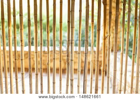 Early morning light pours over bamboo wall at Japanese garden.