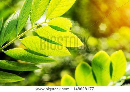 Vintage nature background, Green leaf with light bokeh nature blur background