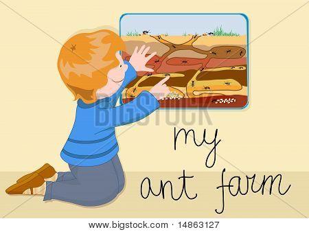 My Ant Farm