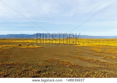 Almost Flat Yellow Landscape Of Tankwa Karoo National Park