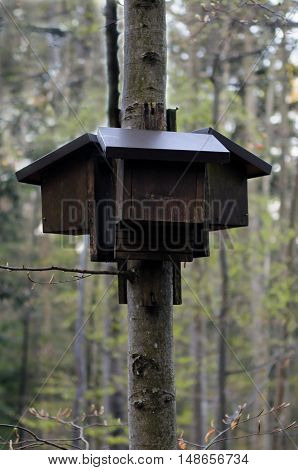 Bat houses set on the beech tree in forest.