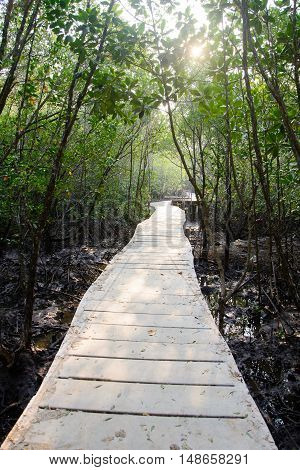 Path in Mangrove forest in trat Thailand