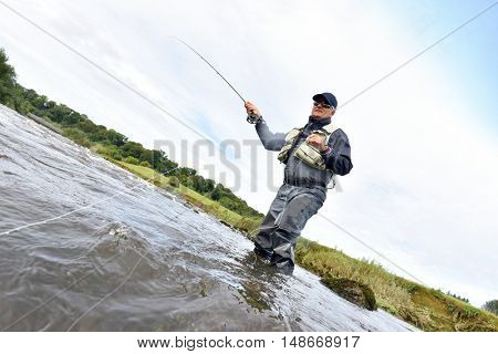 Fly fisherman fishing in river to catch brown trout