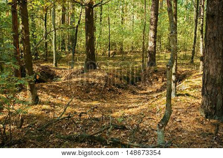 Old World War Trenches In Forest Since Second World War In Belarus