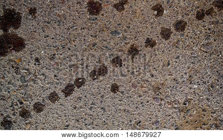 Asphalt, asphalt texture, real asphalt texture background, scabrous asphalt background, seamless asphalt background, closeup, traces on the asphalt