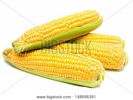 Ears of Corn isolated on a white background.