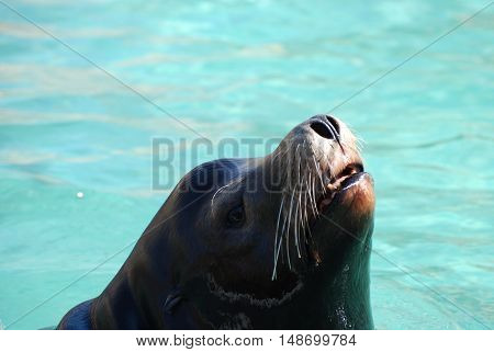 Sea lion with his nose poking out of the water's surface.
