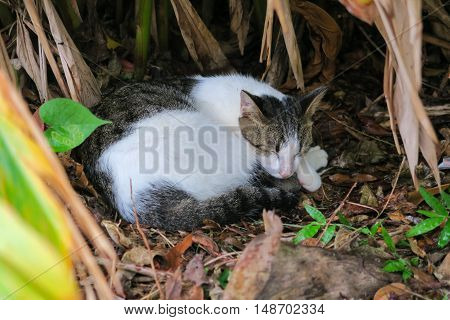 Two toned cat sleep happily  in a bush