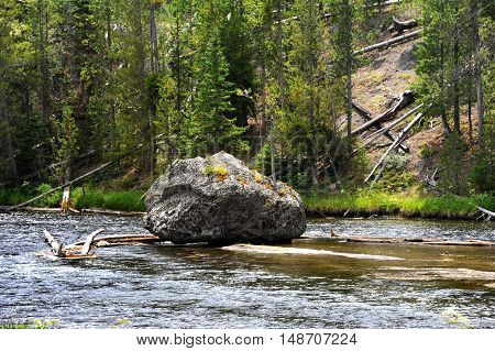 Huge boulder sits all by itself in Firehole River in Yellowstone National Park. Several young saplings tenaciously cling to life on its surface.