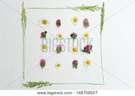 Frame Of Clover And Chamomile And Field Grass
