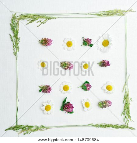 Frame With Clover And Chamomile And Field Grass