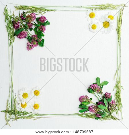 Frame With Clover And Chamomile And Green Field Grass
