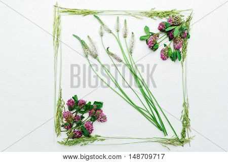 Frame With Clover And Field Grass On White Background