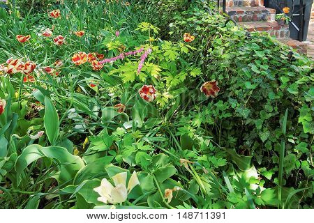 Flowerbed With Tulips Near One Of The Houses