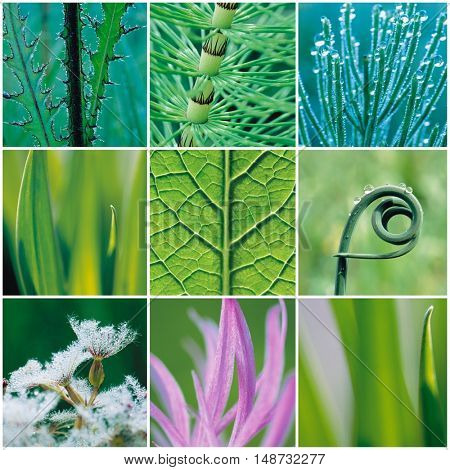 Collage of various leaves
