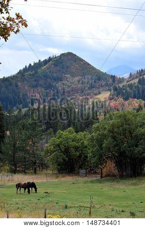 fall in the mountains with fall colors near Sundance ski resort Utah