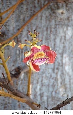 close up sal flower in nature garden