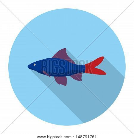 Red Tail Shark fish icon flat. Singe aquarium fish icon from the sea, ocean life flat.