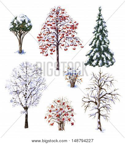 Hand drawn watercolor illustration. Set of various winter trees and bushes. Evergreen and deciduous snow covered plants isolated on white. Trees and shrubs without leaves.