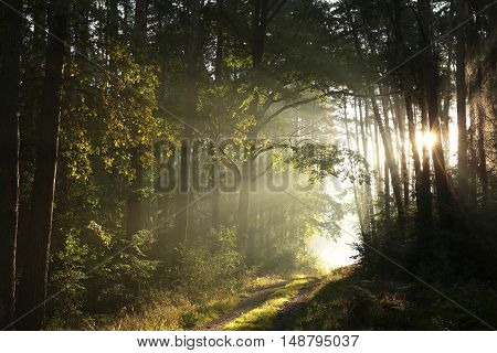 Country road through the forest on a foggy morning.
