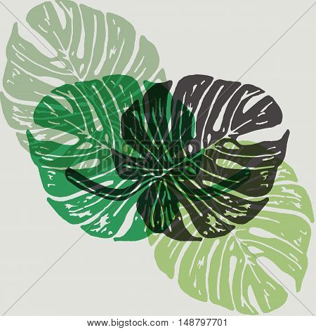 Linocut tropical Monstera leaves on background. Vector Illustrated tropical plants leaves.