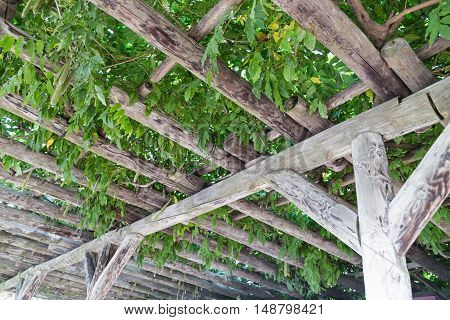 Serene Wooden Pergola With Foliage And Leafs