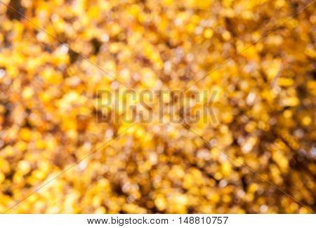 Abstract orange blur background. Autumn yellow background