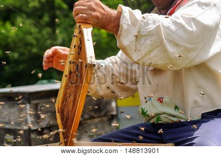 Beekeeper is working with bees on the apiary. Beekeeper pulling frame from the hive. Apiarist is working in his apiary.
