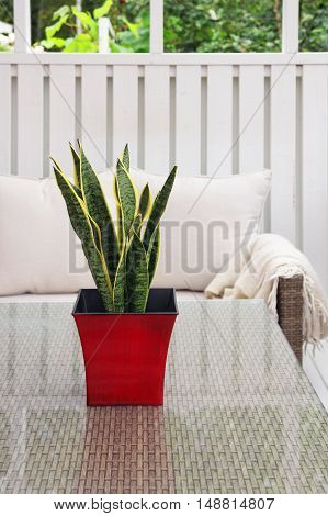 Green plant in red pot on modern terrace glass table