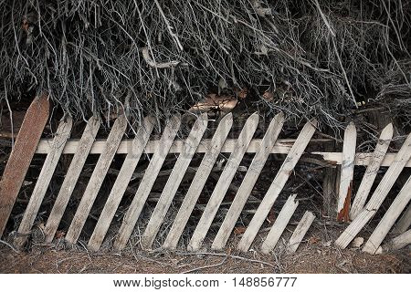 Timber Picket Fence